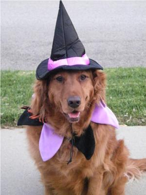 Bailey The Witch